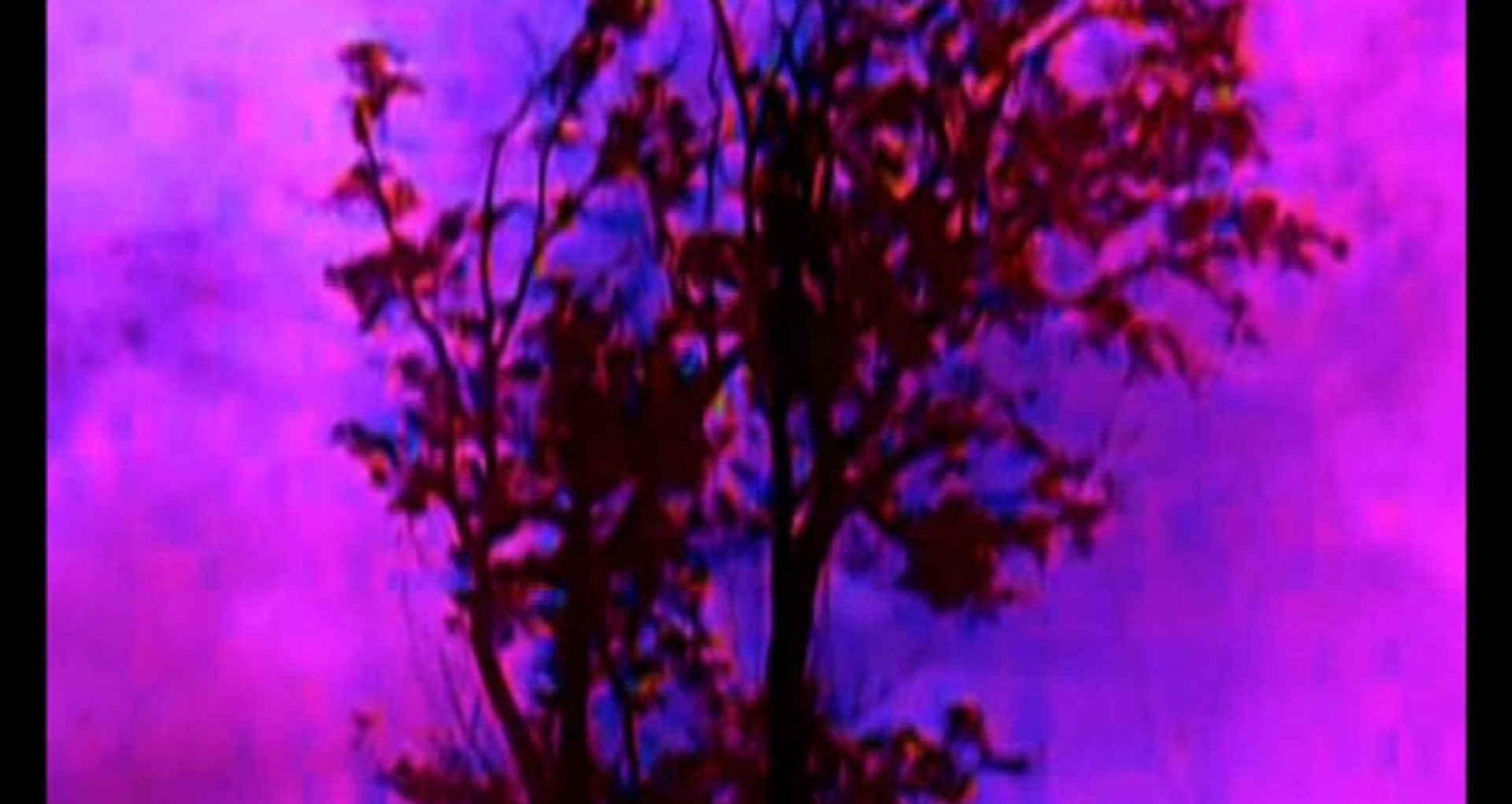 Viola Sonata, Op.25 No.1 by Hindemith (2011)
