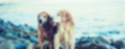 Kansas City Veterinary Care Senior Wellness