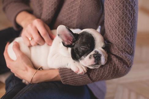 Kansas City Veterinary Care Wellness