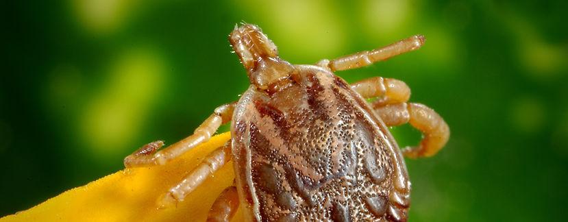 Kansas City Veterinary Care Parasite Control