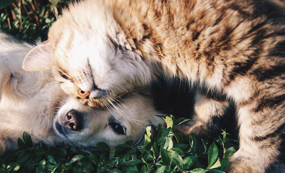 animal-cat-cute-46024.jpg