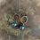 Thumbnail: Rainbow Lava Stone + Brass Earrings