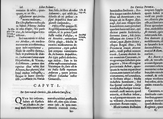 8. Bado, S. Anastasis Bollus genovai ker