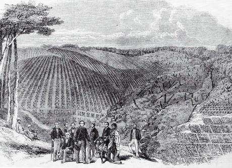 39. Ültetvény, Nilgiri-hegység 1861.jpg
