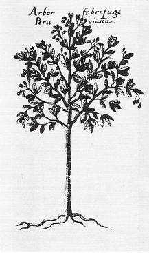 15 A. Perui lázfa, 1662.jpg