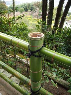 KyotoBamboo.jpg