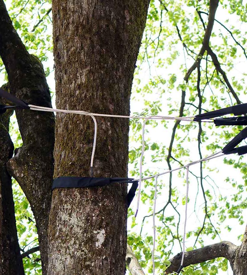 arb-tree-bracing