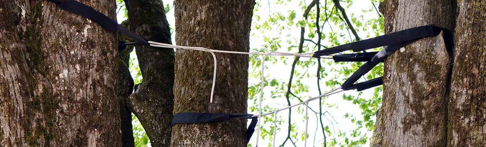 tree-bracing