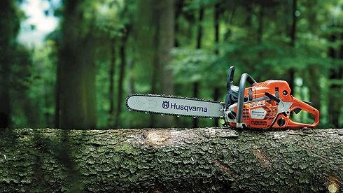 tree chainsaw