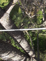 Tree cabring