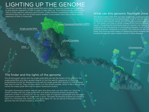 Lighting Up The Genome