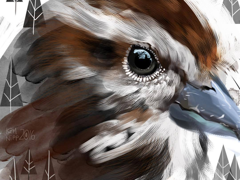 Bird Editorial