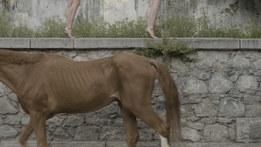 A Horse Has No Concern