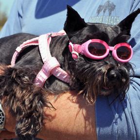 Doggie Lake Days