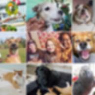 dog-walker-pet-sitters.jpg