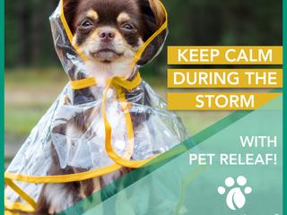 Your Pet & Summer Stressors