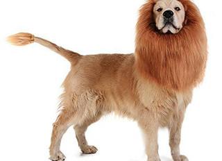 Top 10 Dog Costumes For 2018