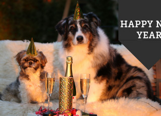 5 Tips For Keeping Your Pet Safe During New Years Eve Celebrations