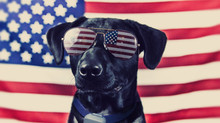 Pet Safety Tips for the Fourth of July