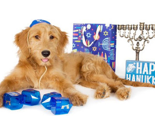 Hanukkah Dog: Guide to Celebrating Hanukkah Safely With Your Pets