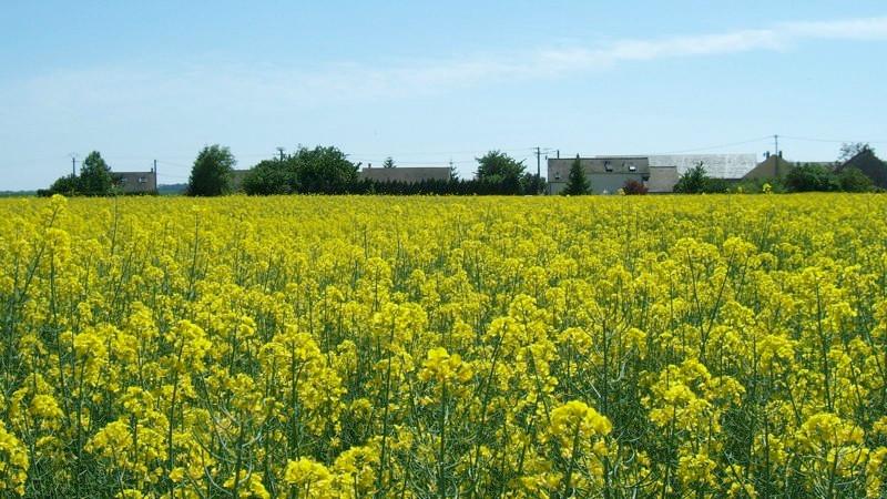 DSCF7510_J4-Le_village_de_Puiselet_1280x