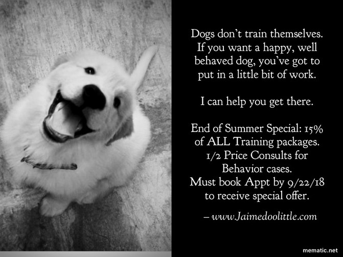 End Of Summer Dog Training Special Discount-Palm Beach County, Florida