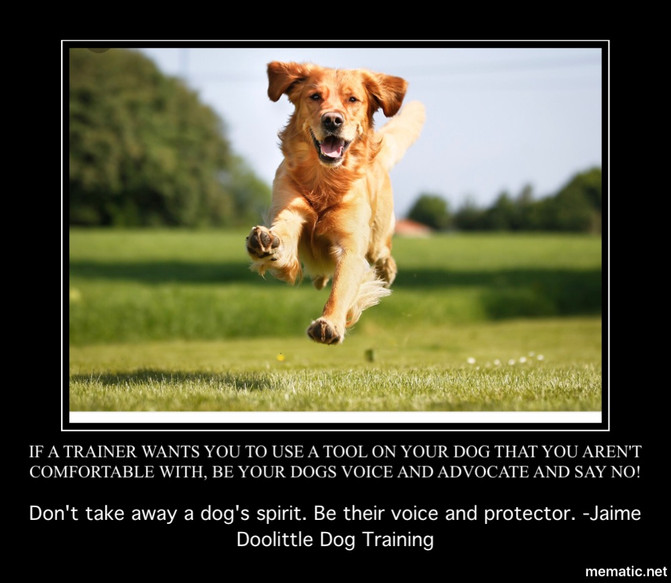You ARE allowed to say No to your Dog Trainer