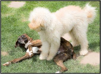 dog standing over dog
