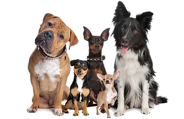 dog training classes west palm beach