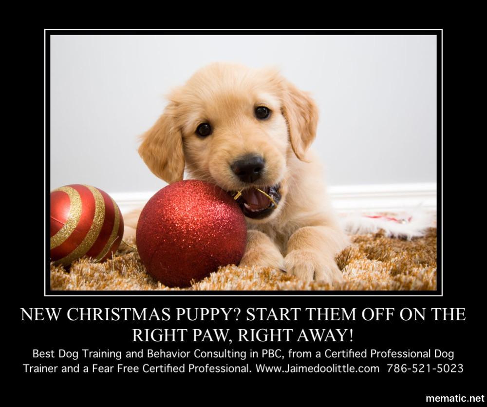 Dog Trainer Palm Beach County Florida