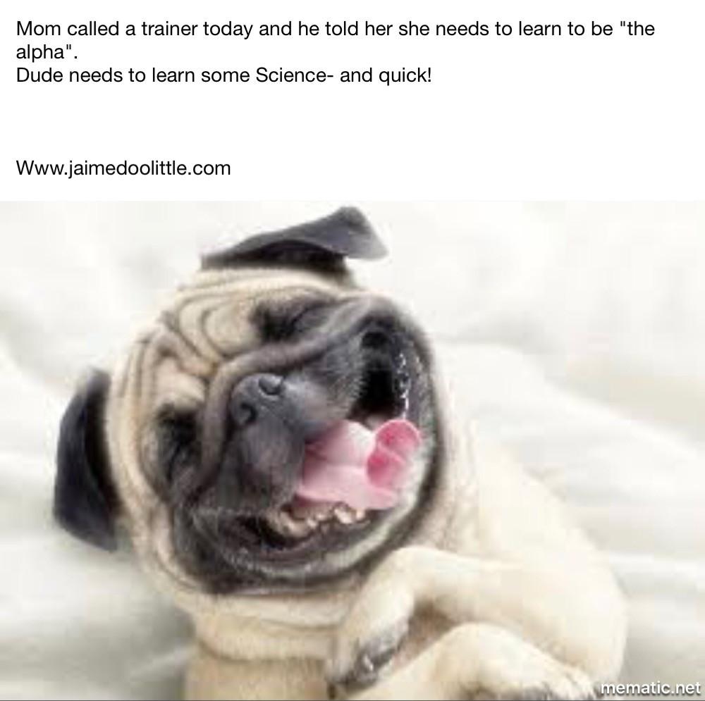 Dog trainer jupiter florida