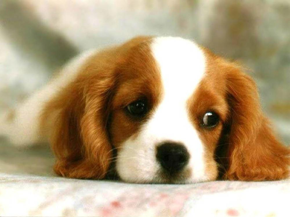 Cute Puppy, Dog Trainer
