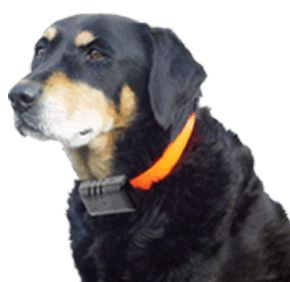 The Science on Shock Collars
