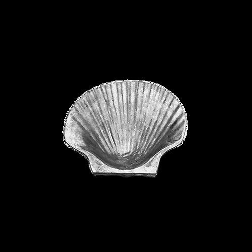 Baking Sea Shell (Polished)