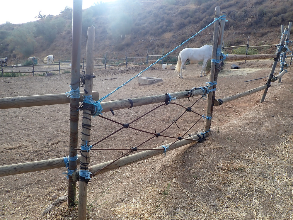 A horse paddock, a gate and fence I repaired, Tequila the horse, in the background