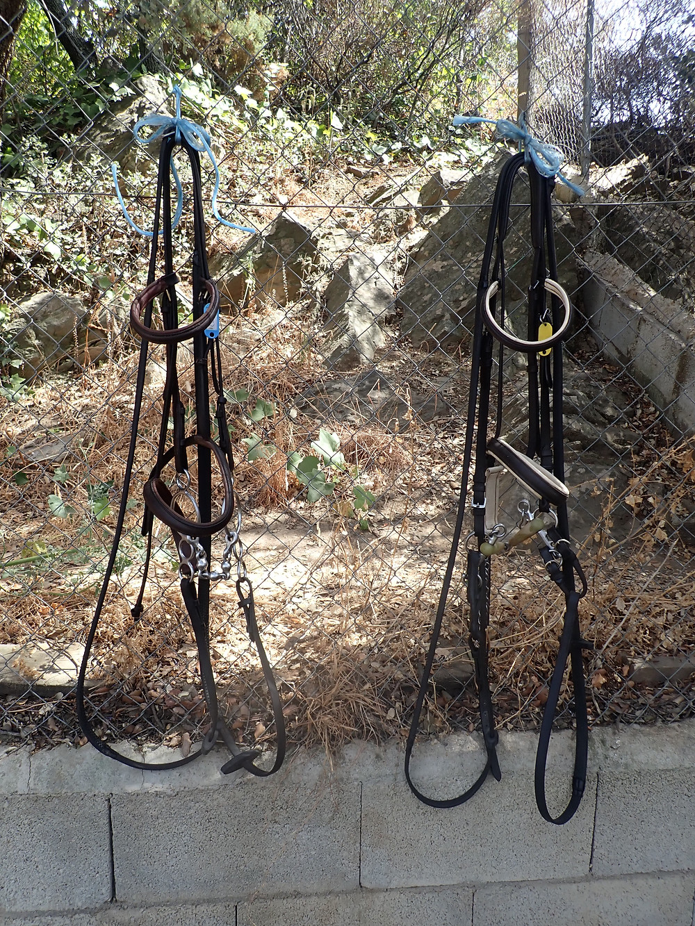 Two horse bridles, hanging up, after I cleaned them