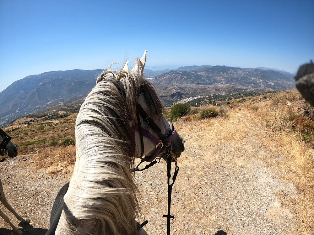 A horses head and neck, I'm riding Tequila, mountains in the background