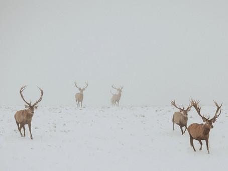 Séance photo d'engagement en hiver