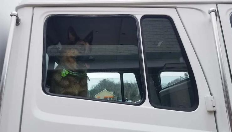 Dog in Truck Cab
