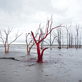 Venal Series   Epecuen 2018