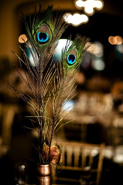 teal peacock feathers