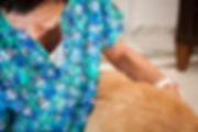 Akupunktur für Tiere
