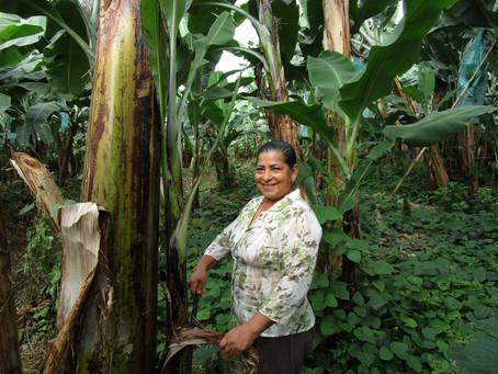 Top banana - women in sustainable farming