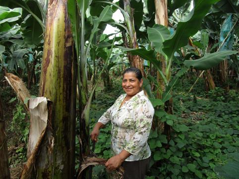 Ecuador - Women in sustainable farming