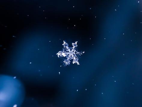 The Ignorant Snowflake