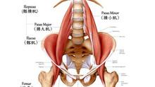 靈魂的肌肉;腰(大小)肌(Psoas)