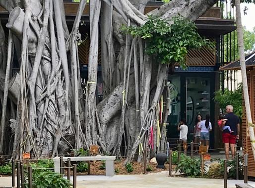 A Tropical Urban Oasis: How Upper Buena Vista Got it Right