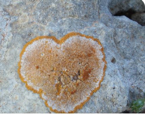 loveheart in moss