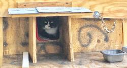 A heated house inside