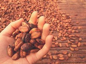 cocoa beans hand.jpg